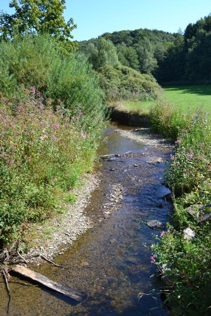 Der Eifgenbach am Jakobsweg_klein