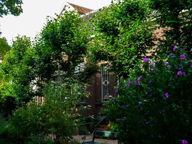 Garten (1 von 1)