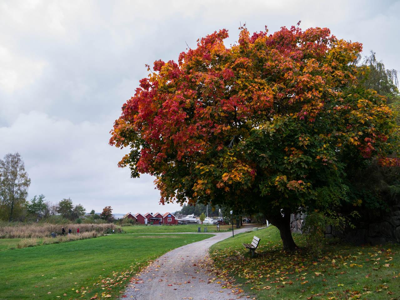 Herbst (1 von 1)