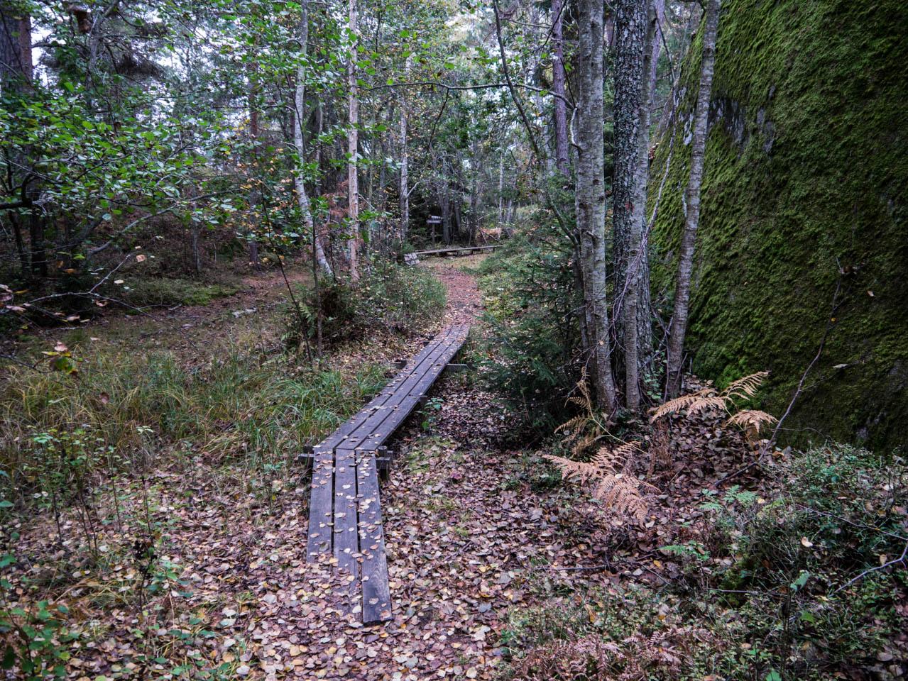 Wald 2 (1 von 1)