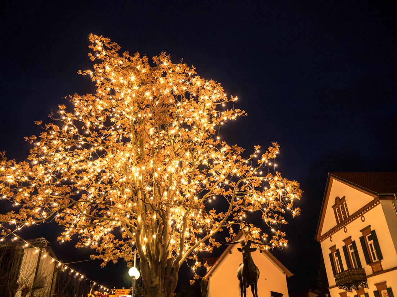 leuchtender Baum (1 von 1)