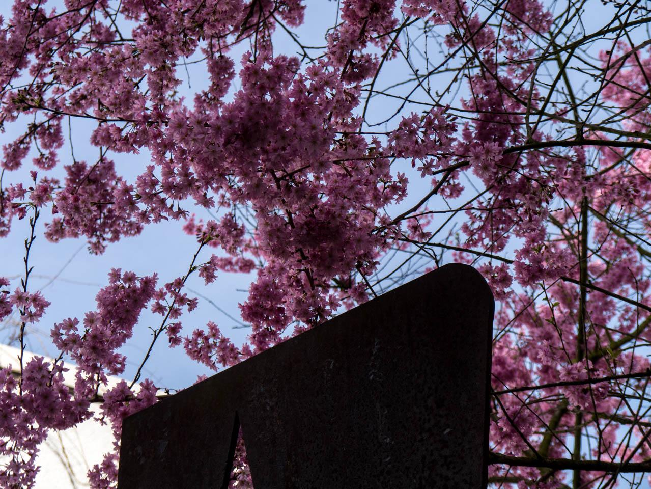 Dunkle Blüten (1 von 1)