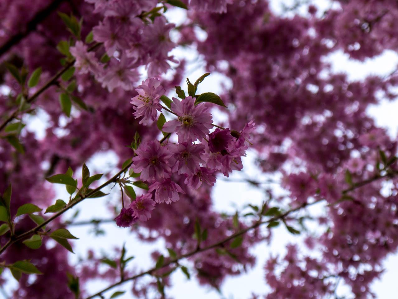 Dunkle Blüten nah (1 von 1)