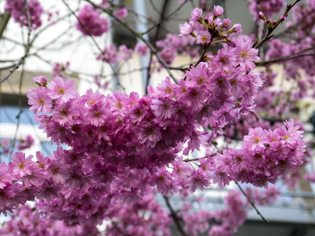Kleine Blüten (1 von 1)
