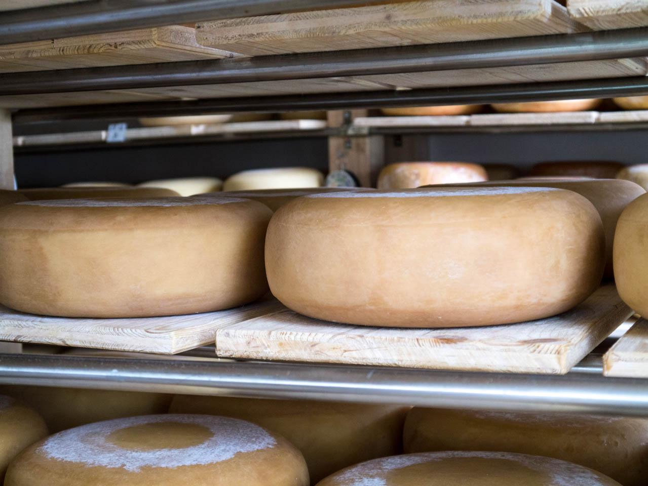 Alles Käse (1 von 1)