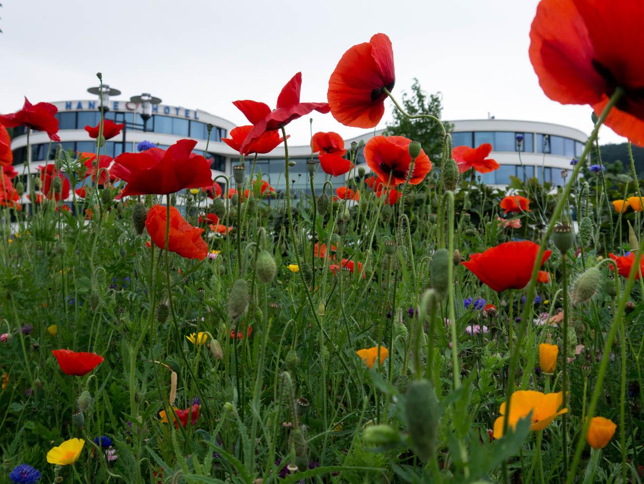 Hotel hinter Wildblumen (1 von 1)