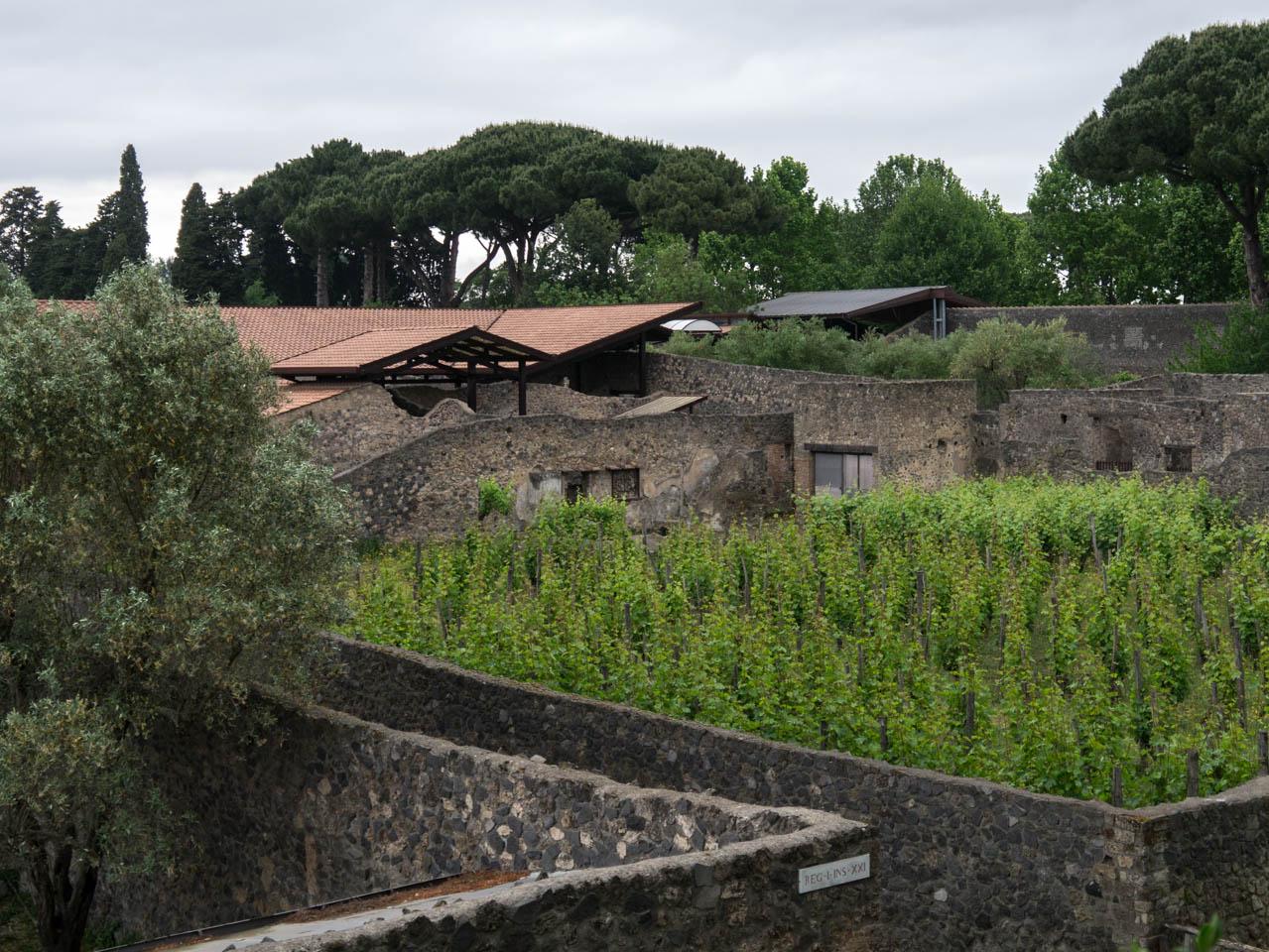 Weinanbau (1 von 1)