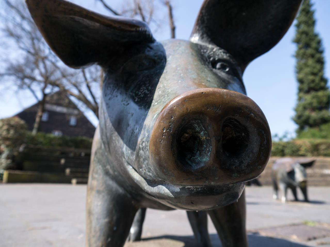 Schweinchen (1 von 1)
