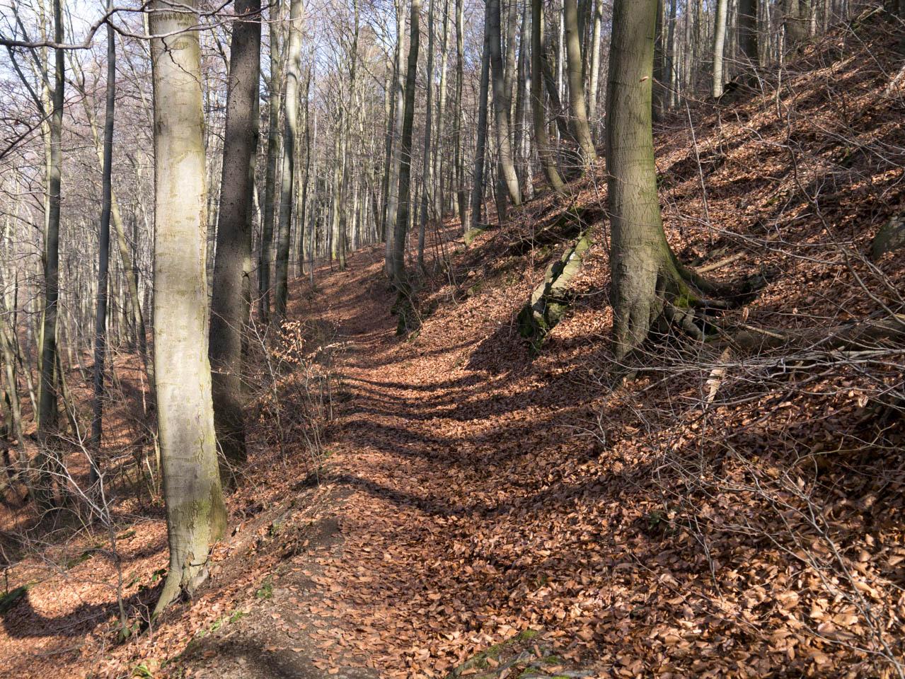 Weg zum Baumwipfelpfad (1 von 1)