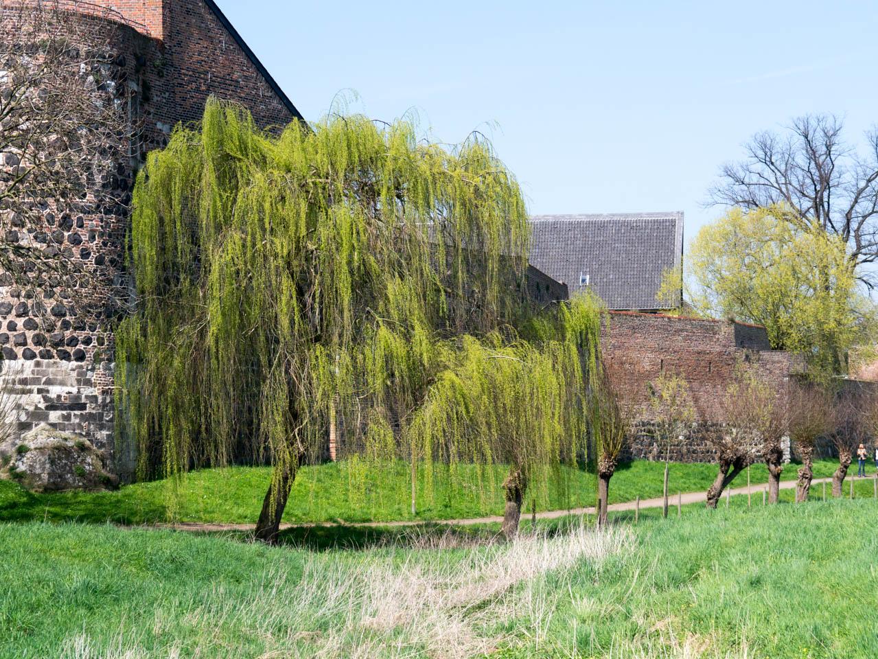 alte Mauern umgeben von Natur (1 von 1)