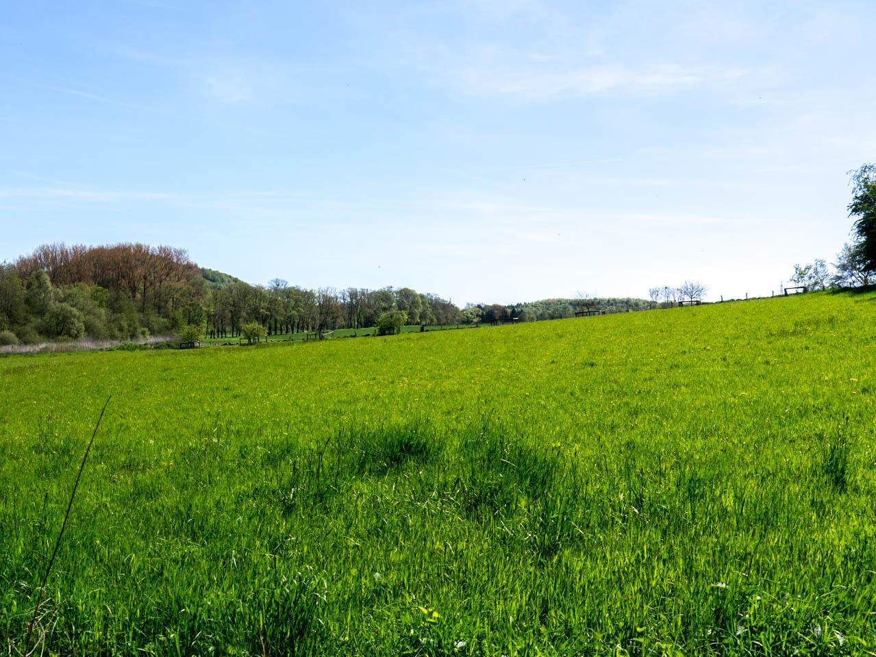 sattgrüne Wiesen (1 von 1)