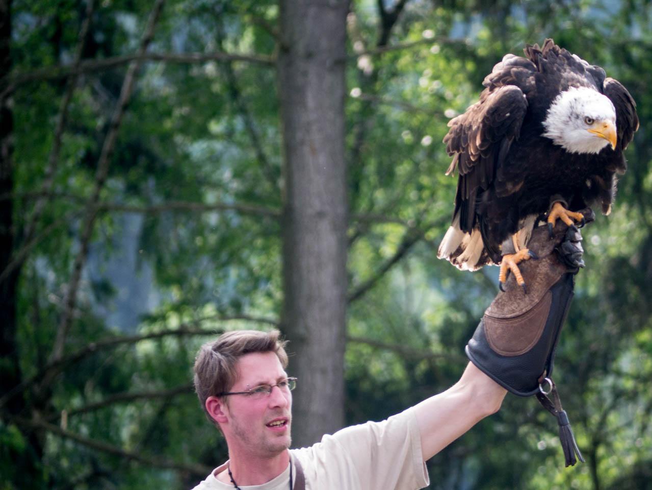Falkner und Adler (1 von 1)