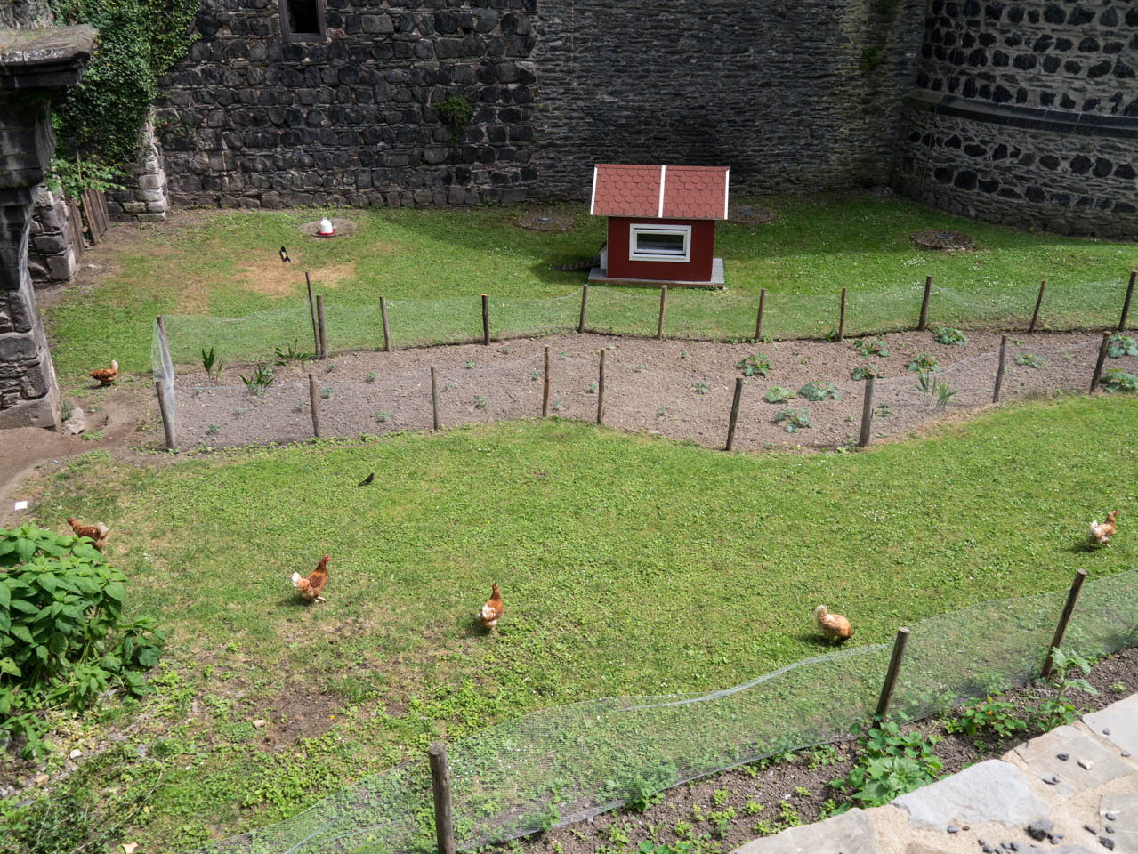 Hühner im Burggraben (1 von 1)