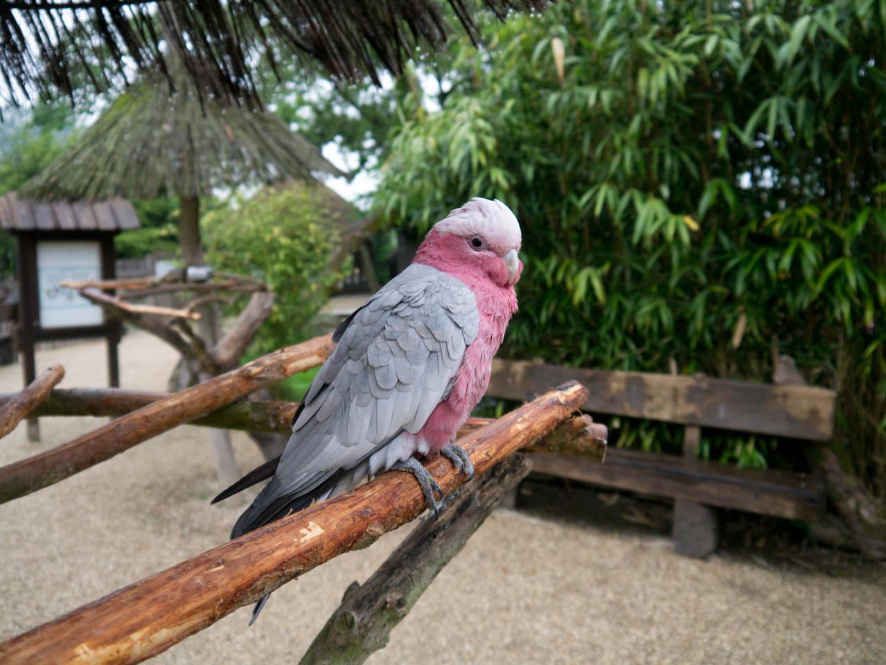 Papageienbereich (1 von 1)