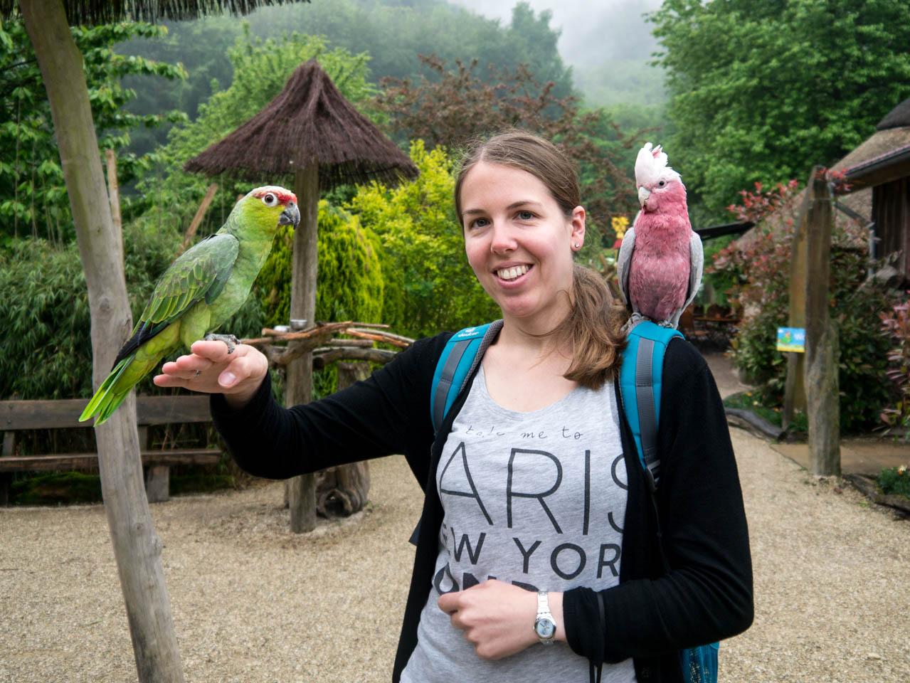 Papageienkuscheln (1 von 1)