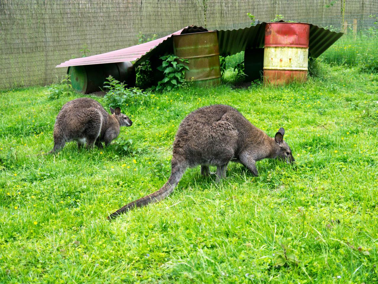 es leben auch ein paar Säugetiere im Park (1 von 1)