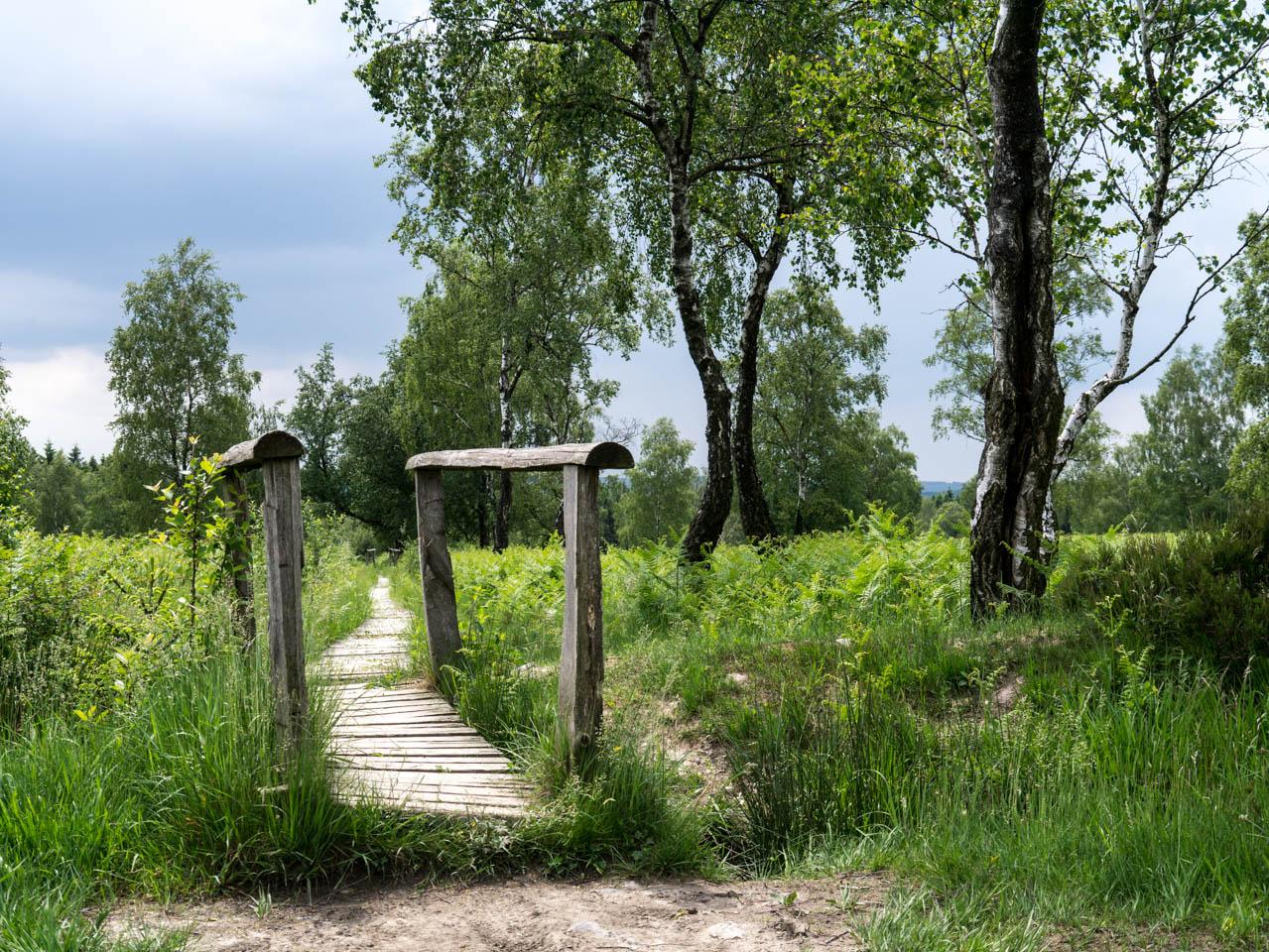 auf Holzstegen durch die Heide (1 von 1)