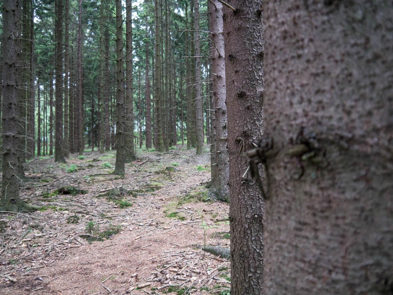 mitten im Wald (1 von 1)