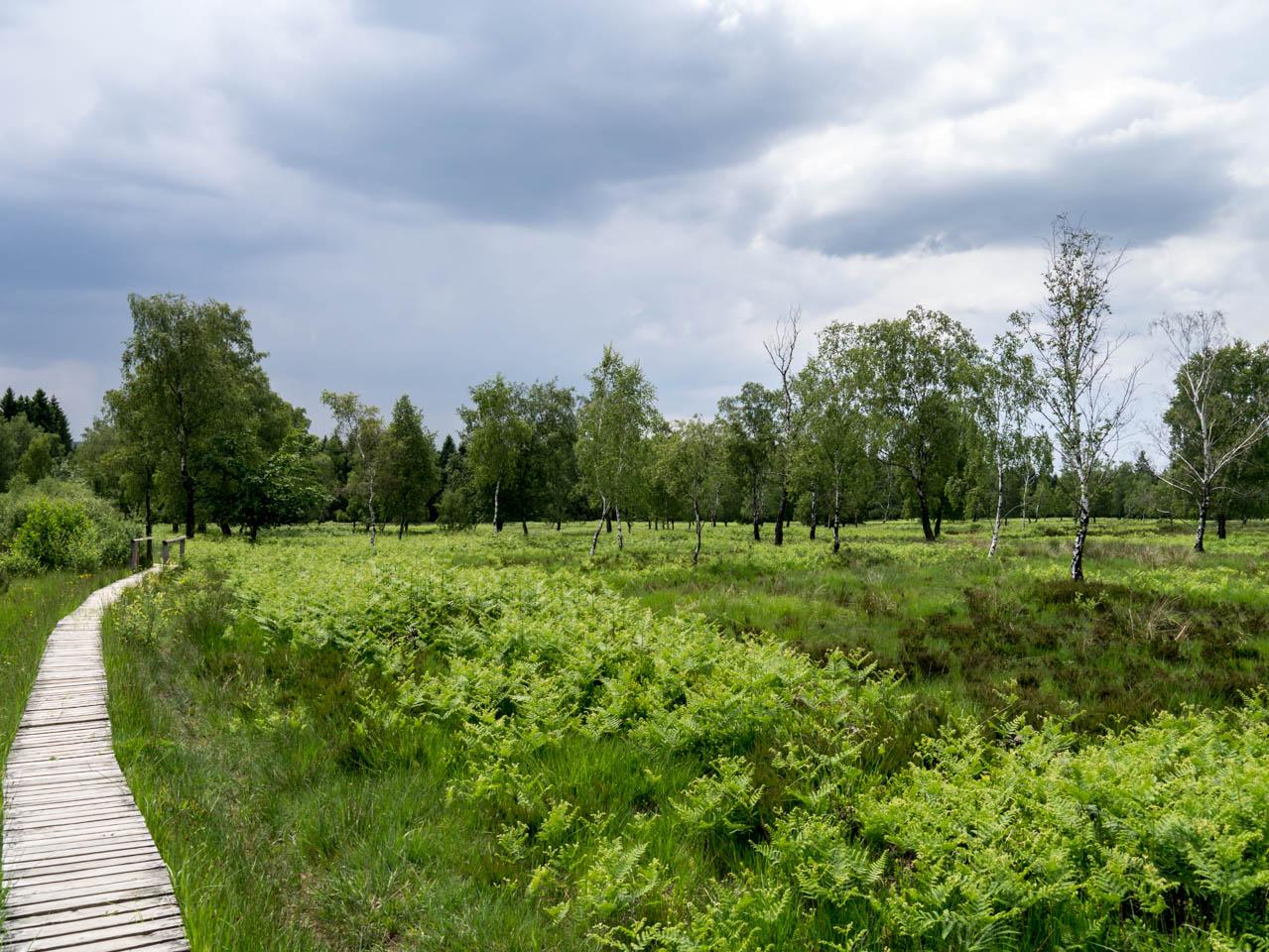 wunderschöne Heidelandschaft (1 von 1)